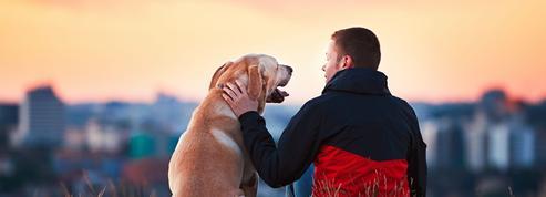 «Comment l'homme parle-t-il de l'animal?»: ce qu'il faut savoir pour briller au concours d'entrée aux écoles de commerce