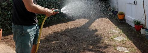 Planter ou replanter un carré de gazon