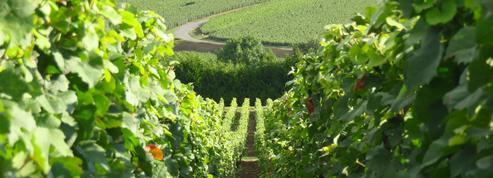 Seul un amoureux du vin pourra répondre à ces questions d'œnotourisme