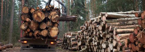 Investir en forêt, un placement sûr et durable