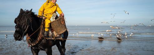 En Flandre avec les derniers cavaliers pêcheurs