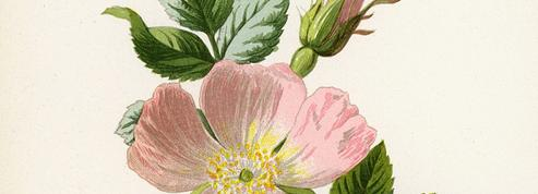 Le bois de rose donne toute sa résistance à la fleur