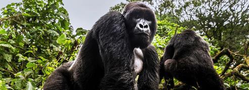 Biodiversité: ces espèces en danger que l'on peut encore sauver