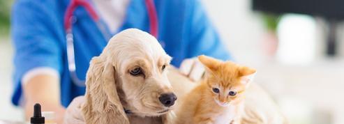 Parcoursup ouvre 160 places dans les écoles vétérinaires