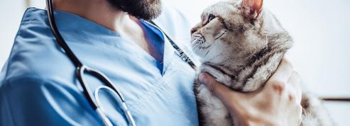 Les écoles vétérinaires pourraient s'ouvrir au privé