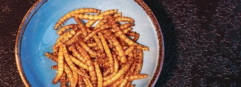 Les insectes se rapprochent de nos assiettes