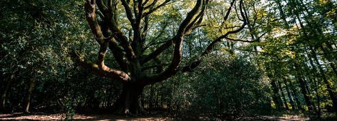 Forêts magiques, châteaux hantés, trésors cachés… Êtes-vous incollable sur ces légendes du patrimoine français?