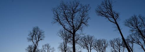 Il faut sauver la forêt française: Aux arbres citoyens!