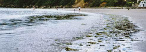 Algues vertes: l'État attaqué pour préjudice écologique