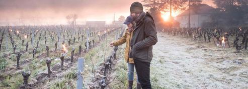 Gel: l'agriculture française sous le choc