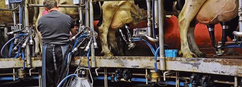 Un tiers des producteurs laitiers envisage de réduire ou d'arrêter leur production