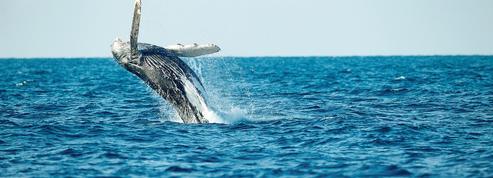 James Cameron dans l'antre des baleines pour Disney +