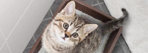 Puis-je nettoyer le bac à litière de mon chat avec de l'eau de Javel?
