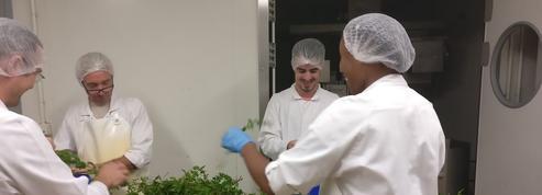 Terre Adélice:quand «entreprise libérée» rime avec hausse de la productivité