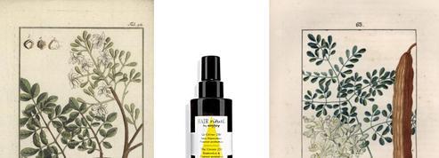 Moringa: la plante qui fait des miracles sur les cheveux