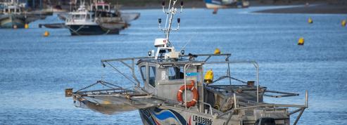 Appel à la réduction des quotas de pêche pour sauver les anguilles