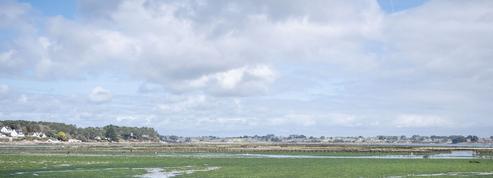 L'impact grandissant de la prolifération des algues