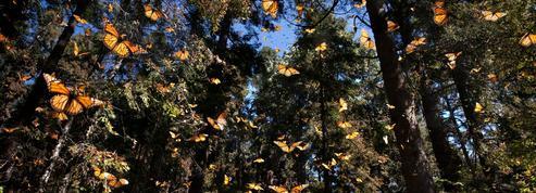 Mexique: la forêt aux mille battements d'ailes
