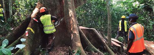 Après l'or noir, le Gabon valorise son or vert