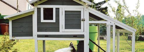 Hausse des adoptions de chats et… de poules