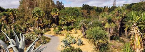 Peut-on ajouter une touche d'exotisme dans son jardin?