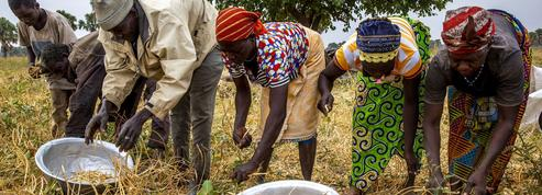Les petits producteurs agricoles, acteurs essentiels pour nourrir la planète