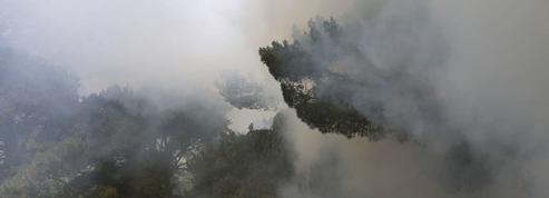 Liban: l'une des plus anciennes forêts du pays ravagée par le feu