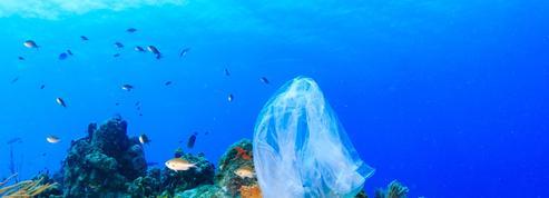 À Marseille, un sommet mondial pour tenter de sauver la nature