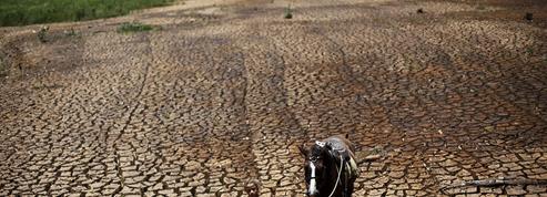 Au Brésil, une sécheresse historique plombe la reprise