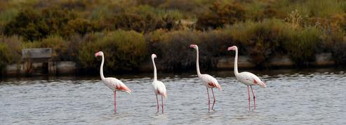 Biodiversité: 5 nouvelles aires protégées sur le territoire français