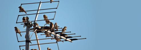 Les oiseaux ont investi les villes confinées