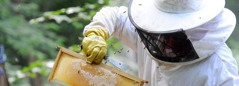 Un député apiculteur fait adopter un texte pour sauver les abeilles, menacées en France