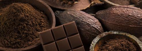 Voiliers: les chocolats Grain de sail ont le goût du large