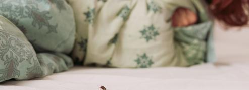 «Ça rend fou»: les punaises de lit ont envahi une cité U du Crous
