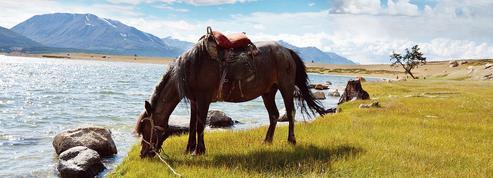 L'origine de la domestication du cheval enfin découverte