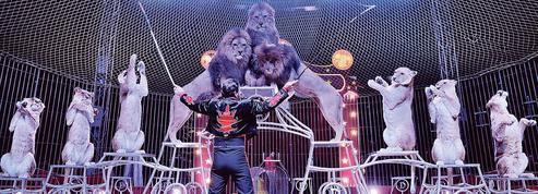 Loi contre la maltraitance animale: bientôt des cirques sans animaux sauvages