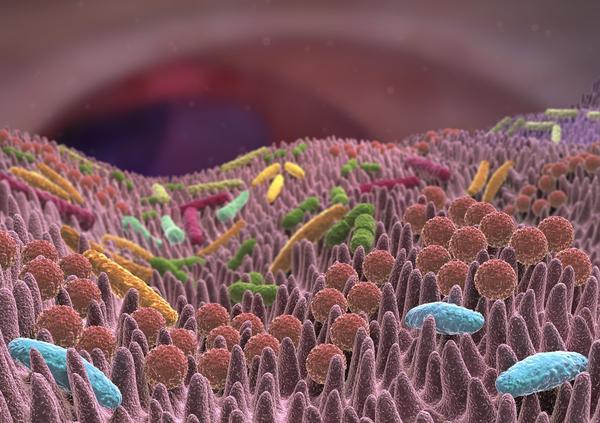40 milliards de bactéries de 1000 espèces différentes peuplent nos intestins.