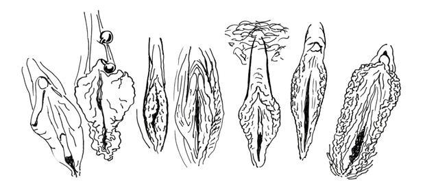 7 exemples de variations vulvaires, schéma extrait de «La revanche du clitoris», éditions La Musardine, 2016.