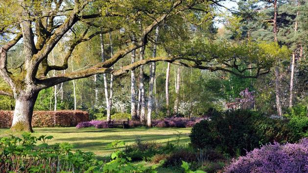 L'arboretum des Grandes Bruyères, un empire d'essences