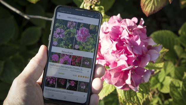 Des applications pour botanistes en herbes