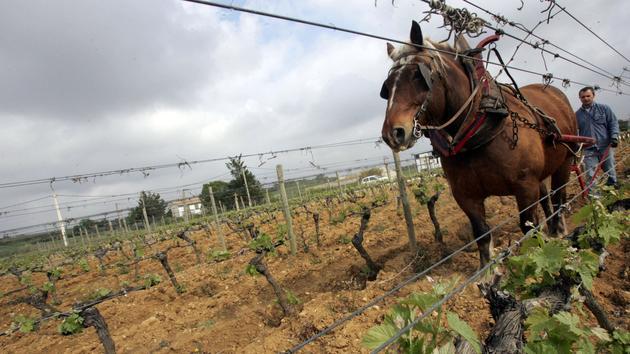 Dans le procès du cheval accusé de faire trop de crottin, la justice tente un ultime arrangement