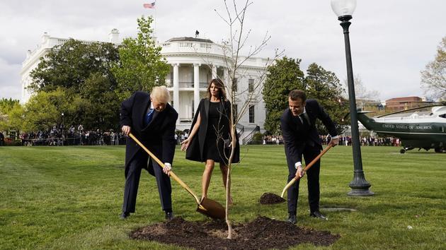 Réchauffement climatique: va-t-on sauver la planète en plantant des arbres?