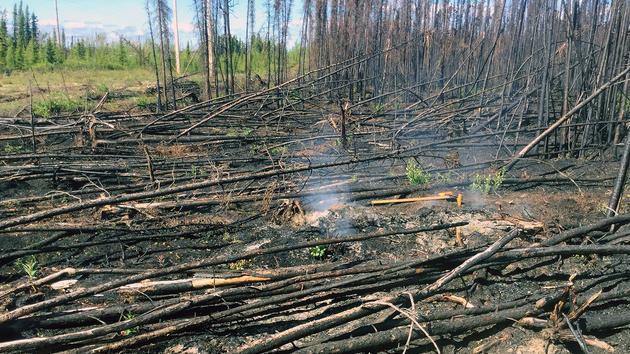 Avec le réchauffement climatique, les incendies «zombies» se multiplient en Arctique