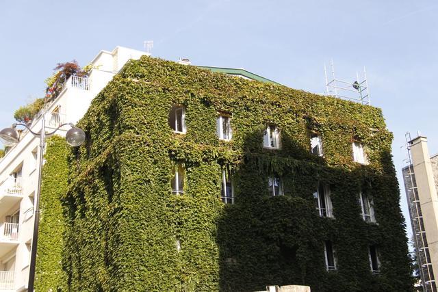 L'entretien des toitures végétalisées est à la charge du propriétaire