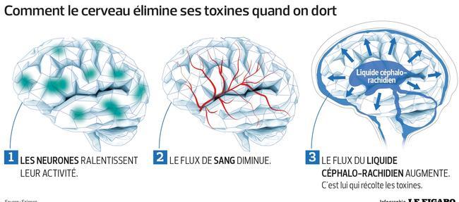 Des grandes vagues nettoient le cerveau de ses toxines pendant le sommeil