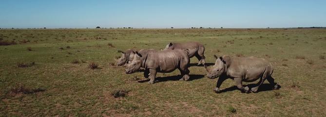 France 5 s'intéresse aux rhinocéros, victimes méconnues du crime organisé