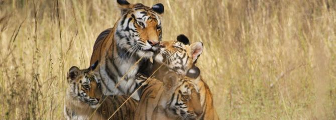 Les documentaires animaliers sur leur 31 pour les fêtes