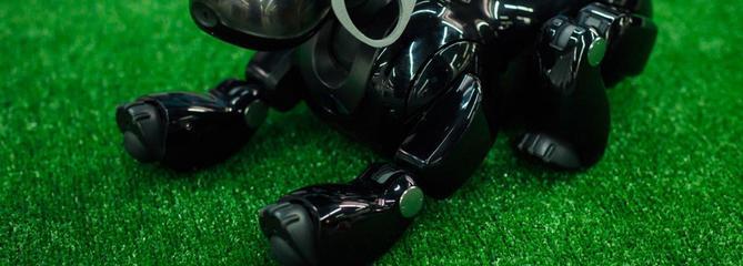 Comparatif chien robot