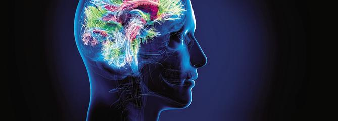 Les mystères du fonctionnement du cerveau
