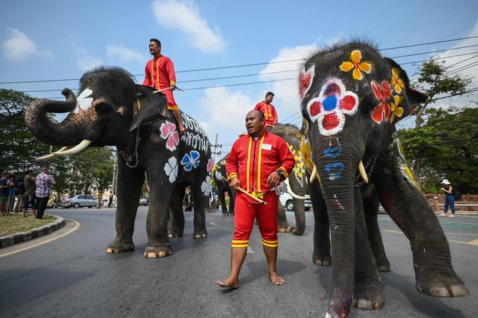 «Forcer les éléphants à avoir ces comportements qui ne leur sont pas naturels s'obtient par la peur et avec l'usage d'un crochet de métal», a dénoncé Tom Taylor, de Wildlife friend foundation Thailand.